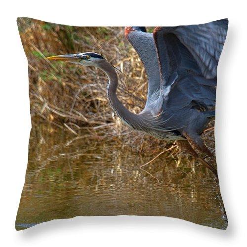 Blue Heron Photograph Throw Pillow featuring the photograph Jump Start by Jim Garrison