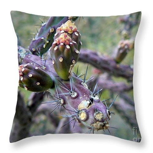 Jumping Cholla Throw Pillow featuring the photograph Jumping Cholla Catalina Foothills by Rincon Road Photography By Ben Petersen