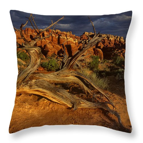 North America Throw Pillow featuring the photograph Juniper Below The Fiery Furnace Arches National Park by Dave Welling
