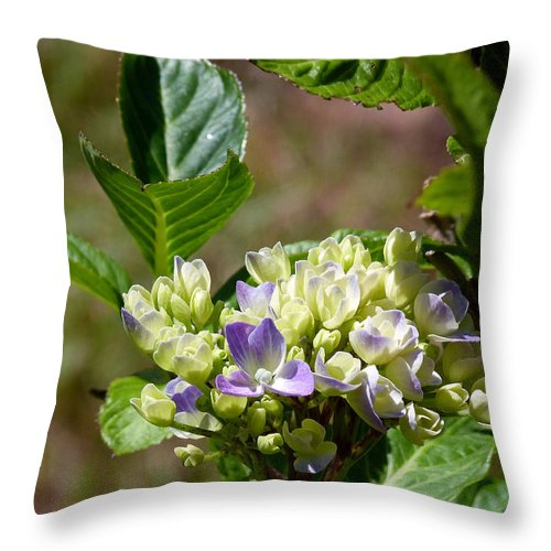 Hydrangea Throw Pillow featuring the photograph Just Blooming by Lynn Bolt