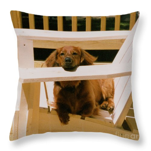 Dog Throw Pillow featuring the photograph Just Chillin by Nancie Johnson