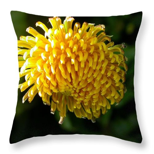 Throw Pillow featuring the photograph Just Dandy by Cynthia Wallentine