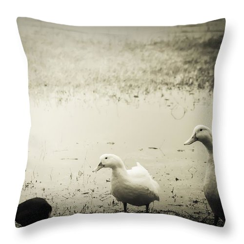 Duck Throw Pillow featuring the photograph Just Duckie by Debra Forand