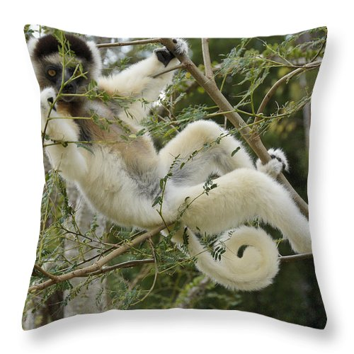 Africa Throw Pillow featuring the photograph Just Hanging Out by Michele Burgess