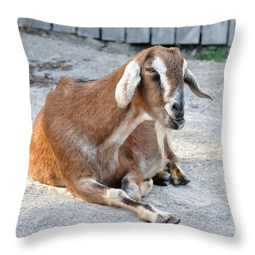 Animals Throw Pillow featuring the photograph Just Leave Me Alone by Jan Amiss Photography