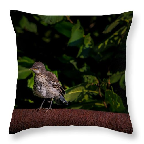 Bird Throw Pillow featuring the photograph Just Out Of The Nest by Donna Lee