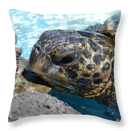 Turtle Throw Pillow featuring the photograph Just Pausing by Amanda Eberly-Kudamik