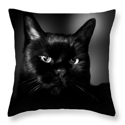 Cat Throw Pillow featuring the photograph Just Thinking by Bob Orsillo