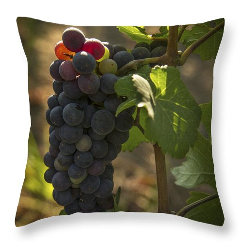 Grape Throw Pillow featuring the photograph Just Waking Up by Jean Noren