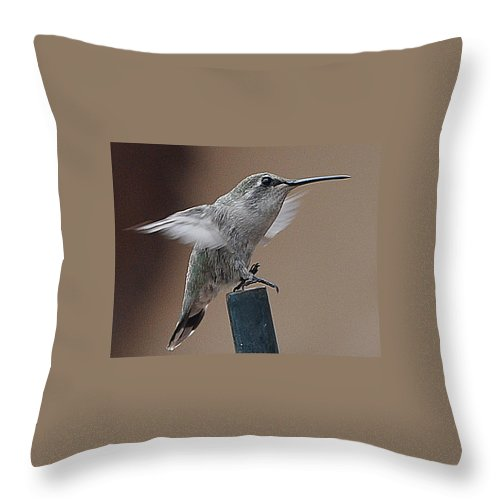 Animal Throw Pillow featuring the photograph Juvenile Anna At Rest by Jay Milo