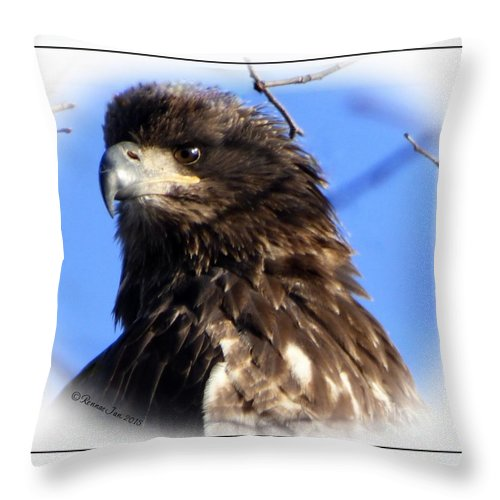 Eagle Throw Pillow featuring the photograph Juvenile Eagle by Rennae Christman