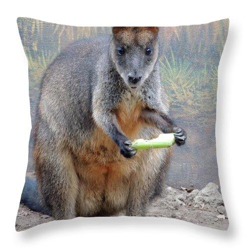 Kangaroo Throw Pillow featuring the photograph kangaroo Snack by Munir Alawi