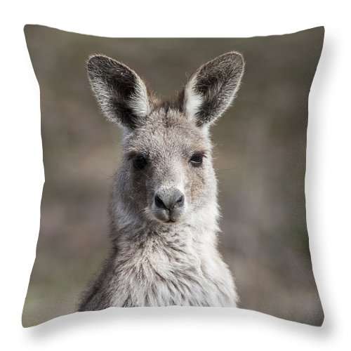 Australia Throw Pillow featuring the photograph Kangaroo by Steven Ralser