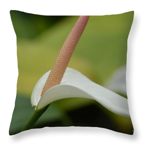 Kauai Anthurium Flower Throw Pillow For Sale By P S