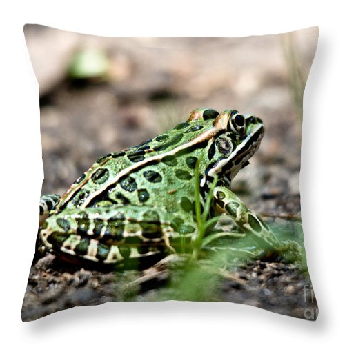 Leopard Frog Throw Pillow featuring the photograph Kermit by Cheryl Baxter