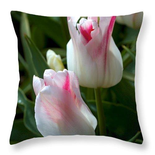 Holland Throw Pillow featuring the photograph Keukenhof Tulip Buds by David Beebe