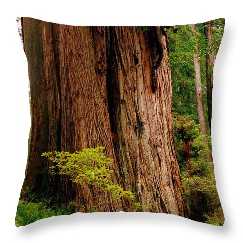 Ferns Throw Pillow featuring the photograph Kevin And The Big Tree - Redwood National Forest by Michelle Calkins