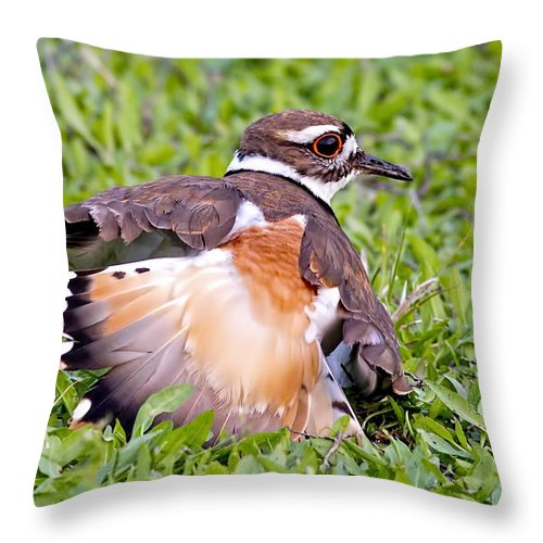 Killdeer Throw Pillow featuring the photograph Killdeer 2 Sleight Of Wing by Gary Holmes