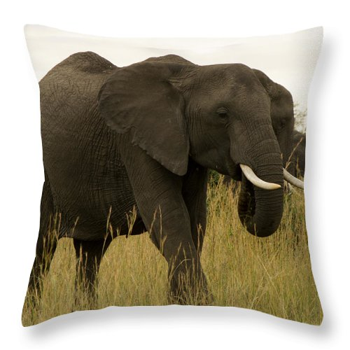 Elephant Throw Pillow featuring the photograph King by Amy Warr