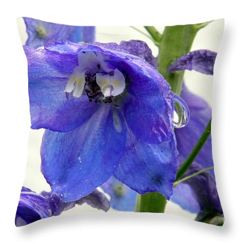 Delphinium Throw Pillow featuring the photograph King Delphinum by Lori Tordsen