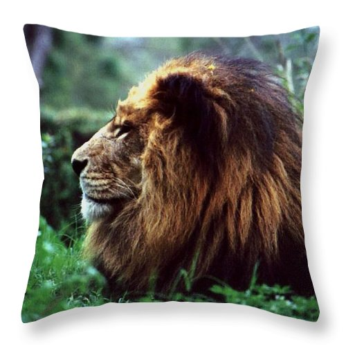 Animal Throw Pillow featuring the photograph King Of Beasts by Glenn Aker