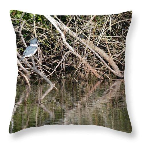 Florida Throw Pillow featuring the photograph Kingfisher by Linda Kerkau