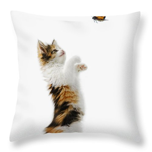 Active Throw Pillow featuring the photograph Kitten And Monarch Butterfly by Thomas Kitchin & Victoria Hurst