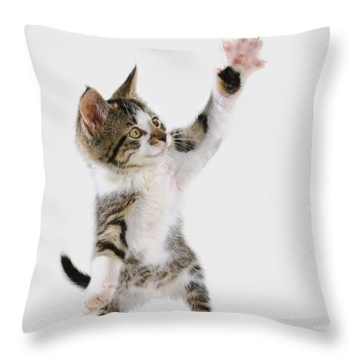 Active Throw Pillow featuring the photograph Kitten by Thomas Kitchin & Victoria Hurst