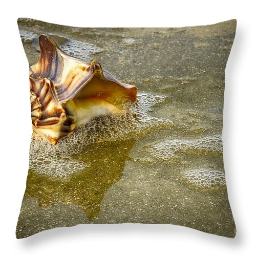 Shells Throw Pillow featuring the photograph Knobbed Whelk 10 Botany Bay by Carrie Cranwill