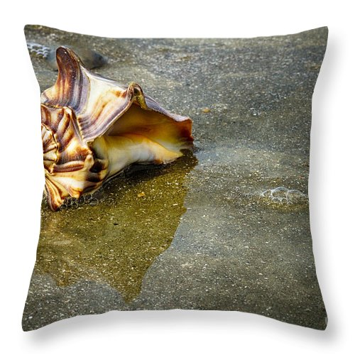 Shells Throw Pillow featuring the photograph Knobbed Whelk 11 Botany Bay by Carrie Cranwill