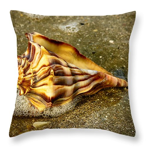 Shells Throw Pillow featuring the photograph Knobbed Whelk 9 Botany Bay by Carrie Cranwill