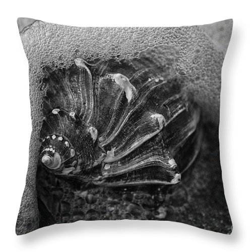 Shells Throw Pillow featuring the photograph Knobbed Whelk Bw 4 Botany Bay by Carrie Cranwill