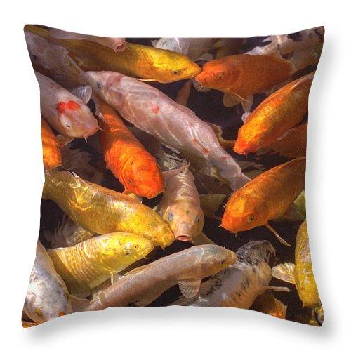 Koi Fish Nishikigoi brocaded Carp Koi Coloration Throw Pillow featuring the photograph Koi Fish Nishikigoi by David Zanzinger