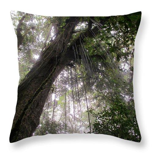Honduras Throw Pillow featuring the photograph La Tigra Rainforest Canopy by David Beebe