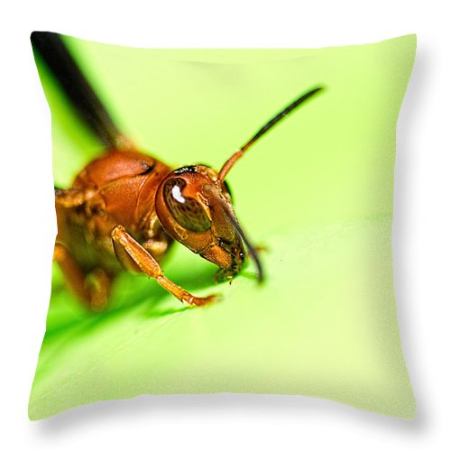 Wasp Throw Pillow featuring the photograph La Vespa by Jon Woodhams