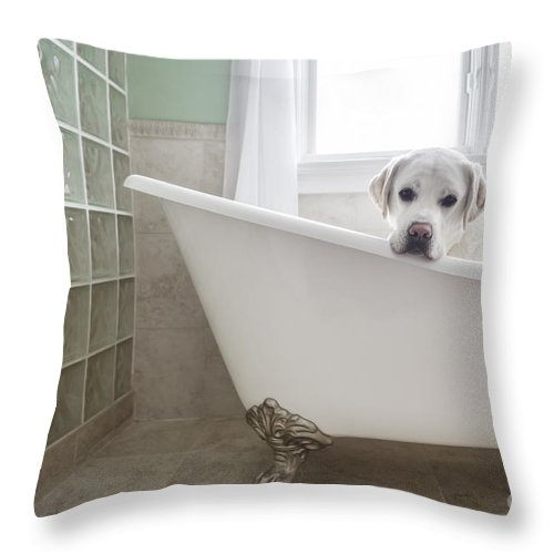 Dog Throw Pillow featuring the photograph Lab In A Bathtub by Diane Diederich