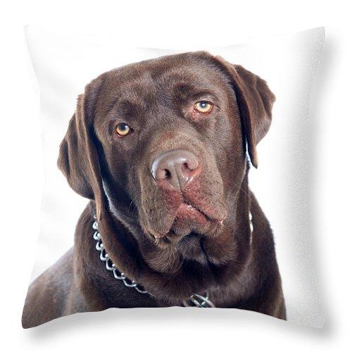 Animal Throw Pillow featuring the photograph Labrador Dog Portrait by Viktor Pravdica