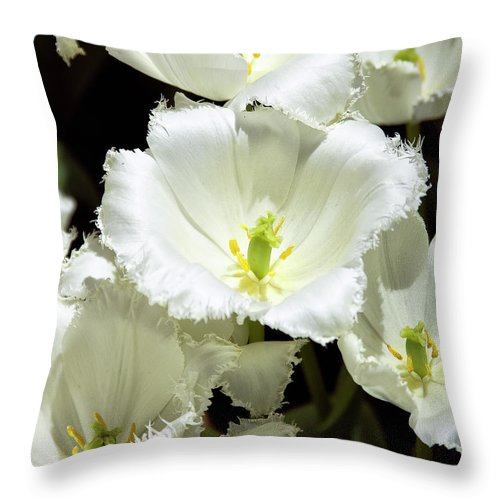 White Flower Throw Pillow featuring the photograph Lace Palm Springs by William Dey