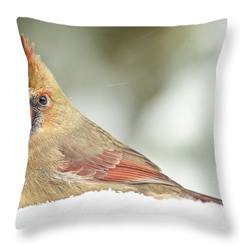 Cardinal Throw Pillow featuring the photograph Lady Cardinal In The Snow by Peg Runyan