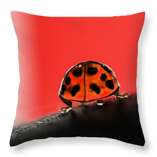 Ladybug Throw Pillow featuring the photograph Lady Got Back by Susan Capuano