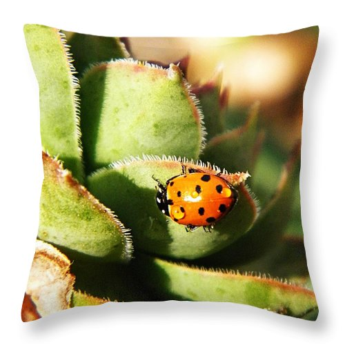 Coccinellidae Throw Pillow featuring the photograph Ladybug And Chick by Chris Berry