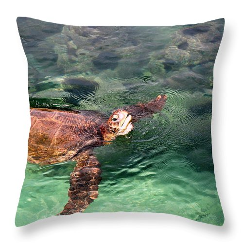 Florida Throw Pillow featuring the photograph Lager Head Turtle 002 by Larry Ward