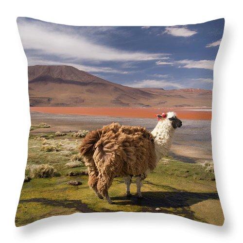 Scenics Throw Pillow featuring the photograph Laguna Colorado Lake With Llama by John Elk