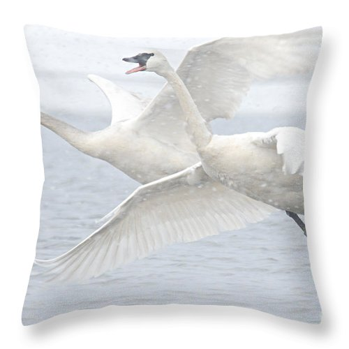 Photography Throw Pillow featuring the photograph Landing In The Snow by Larry Ricker