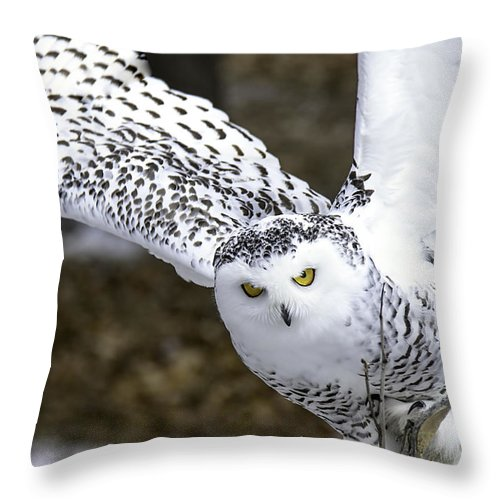 Usa Throw Pillow featuring the photograph Landing Of The Snowy Owl Where Are You Harry Potter by LeeAnn McLaneGoetz McLaneGoetzStudioLLCcom