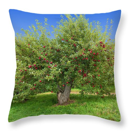 Orchard Throw Pillow featuring the photograph Large Apple Tree by Anthony Sacco
