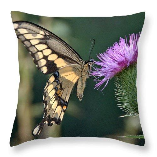 Throw Pillow featuring the photograph Last Bit Of Summer by Cheryl Baxter
