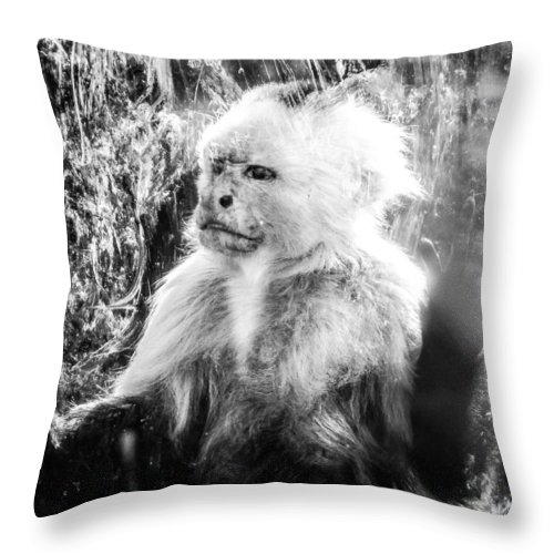 Ape Throw Pillow featuring the photograph Last Hope Of Freedom by Stwayne Keubrick