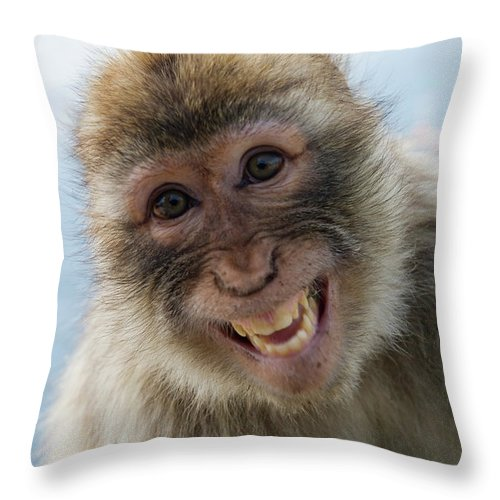 Alertness Throw Pillow featuring the photograph Laughing Gibraltar Ape Barbary Macaque by Holger Leue