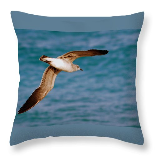 Laughing Gull Throw Pillow featuring the photograph Laughing Gull 002 by Larry Ward